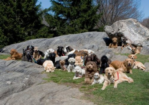 pack-of-dogs