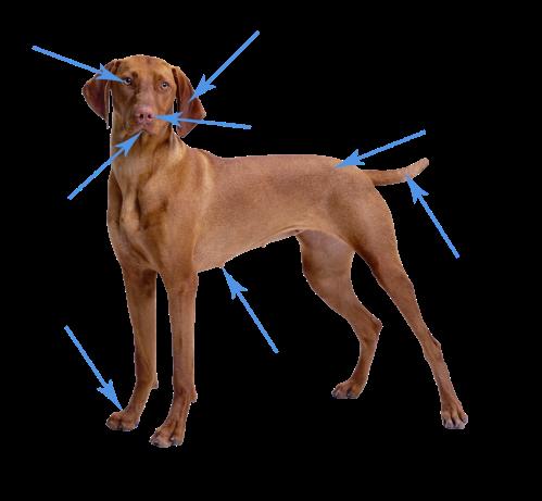 modern-dog copy